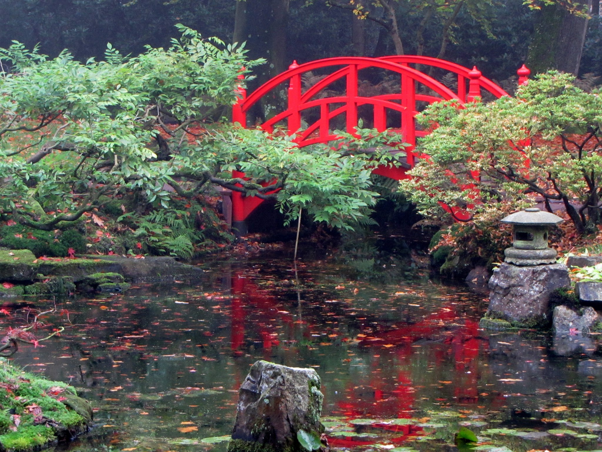 Japanse tuin foto daan de ligt